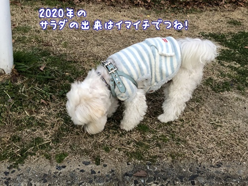 2020正月夕散歩19