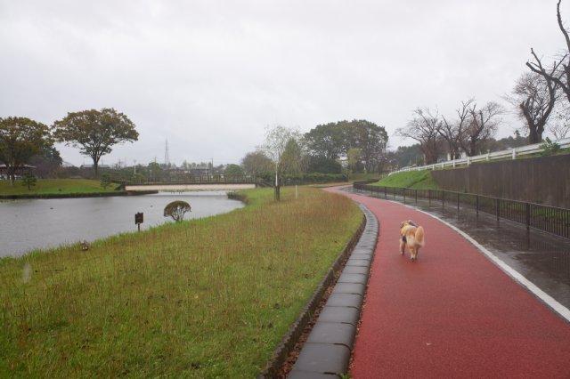 台風19号接近AM8:00 朝の公園 2019-10-12 005