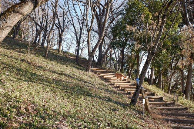 三ッ石森林公園 2020.2.2 011