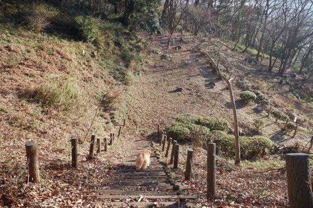 三ッ石森林公園 2020.2.2 015