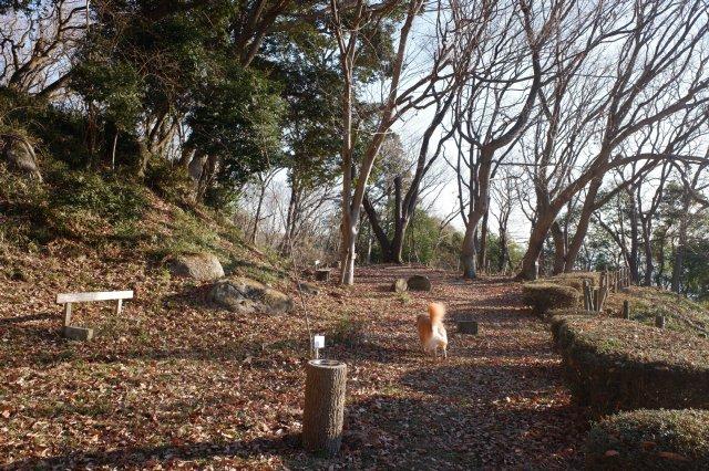 三ッ石森林公園 2020.2.2 016