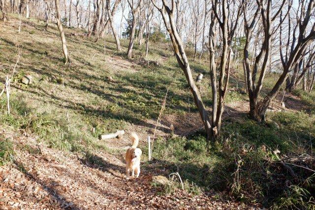 三ッ石森林公園 2020.2.2 019