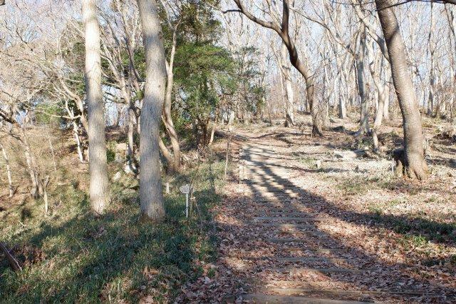 三ッ石森林公園 2020.2.2 023