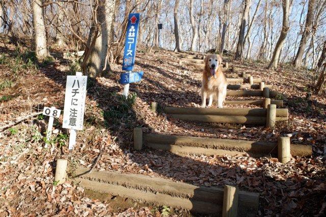 三ッ石森林公園 2020.2.2 026