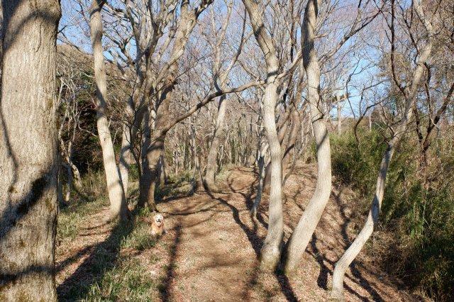 三ッ石森林公園 2020.2.2 030