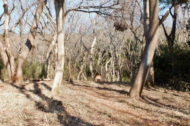 三ッ石森林公園 2020.2.2 035
