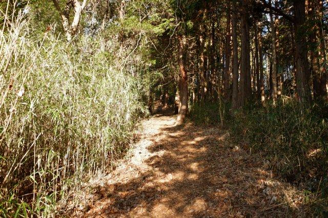 三ッ石森林公園 2020.2.2 039
