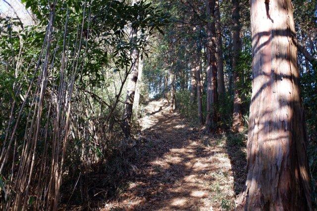 三ッ石森林公園 2020.2.2 040