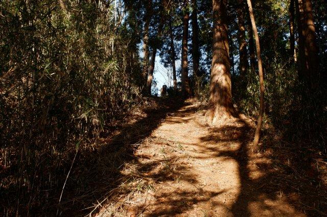 三ッ石森林公園 2020.2.2 042