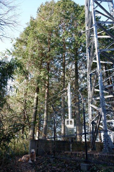 三ッ石森林公園 2020.2.2 043