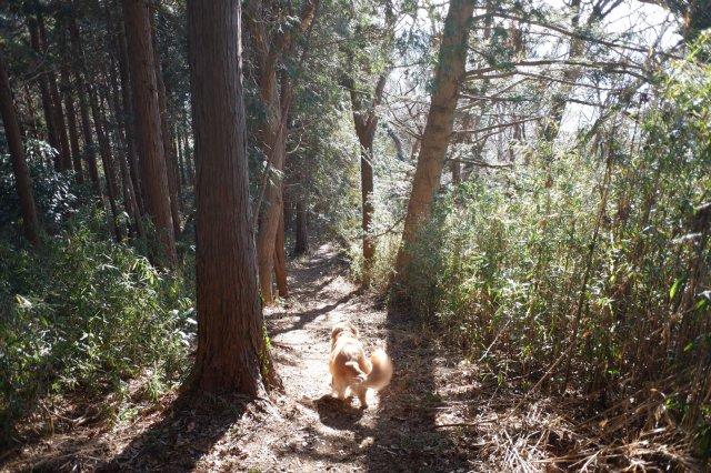 三ッ石森林公園 2020.2.2 063