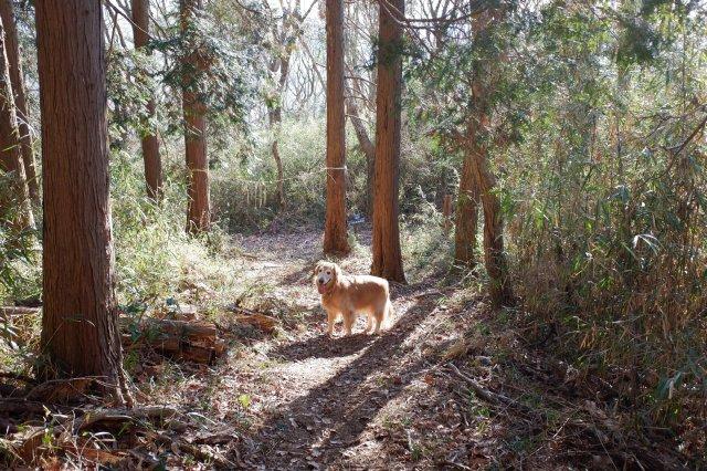 三ッ石森林公園 2020.2.2 067