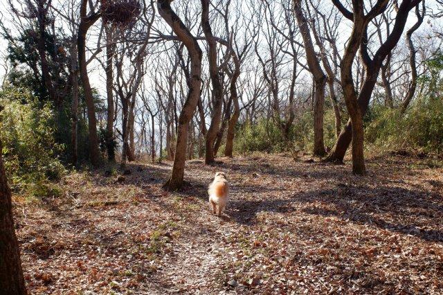 三ッ石森林公園 2020.2.2 070