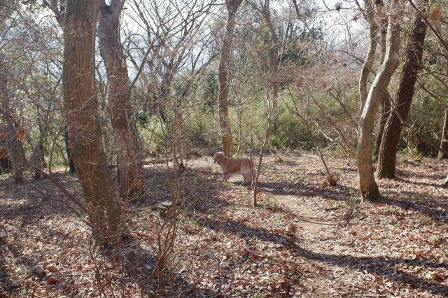 三ッ石森林公園 2020.2.2 073