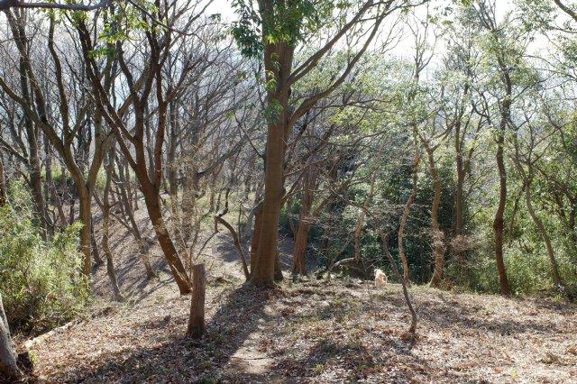 三ッ石森林公園 2020.2.2 074