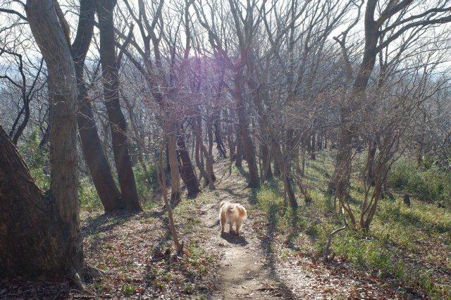 三ッ石森林公園 2020.2.2 082