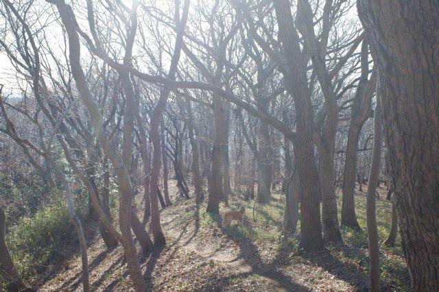 三ッ石森林公園 2020.2.2 084