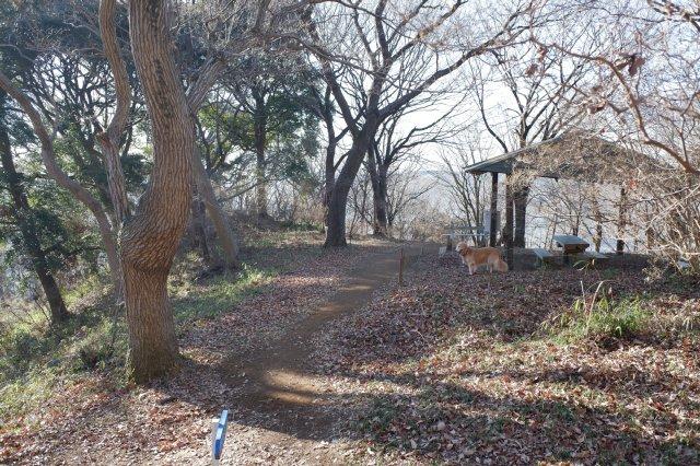三ッ石森林公園 2020.2.2 087