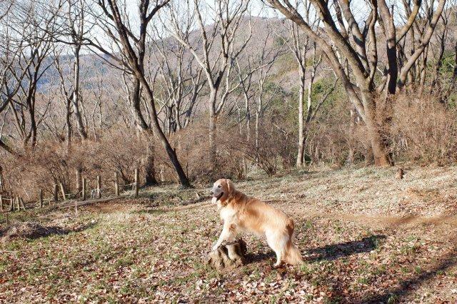 三ッ石森林公園 2020.2.2 092