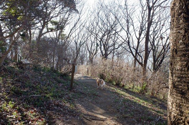 三ッ石森林公園 2020.2.2 094