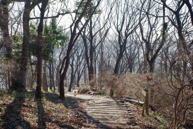 三ッ石森林公園 2020.2.2 095