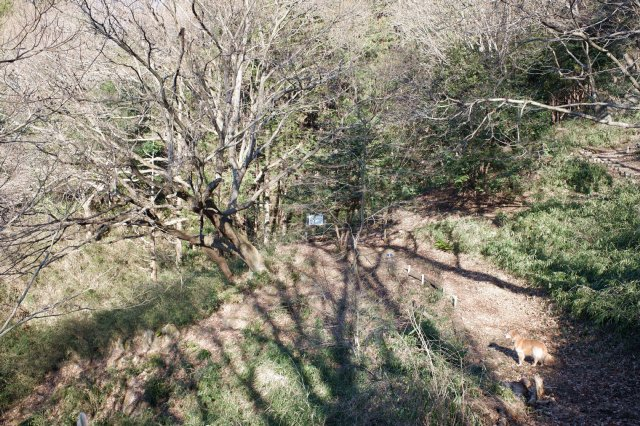 三ッ石森林公園 2020.2.2 106