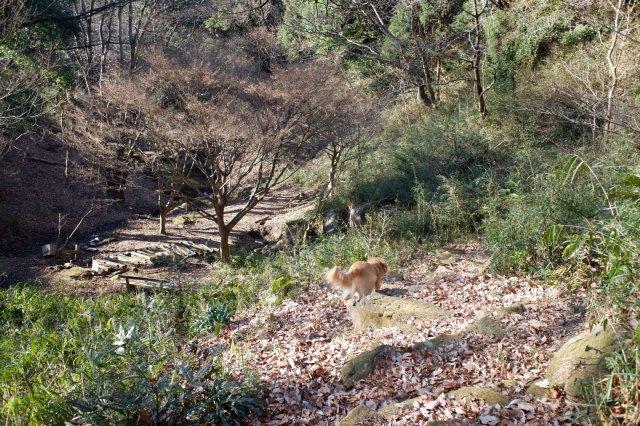 三ッ石森林公園 2020.2.2 107