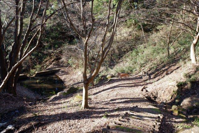 三ッ石森林公園 2020.2.2 109