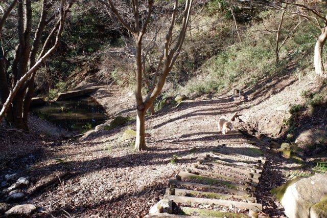 三ッ石森林公園 2020.2.2 110
