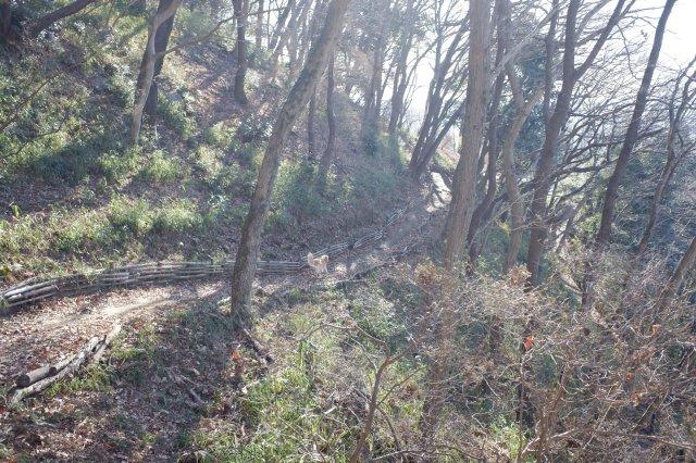 三ッ石森林公園 2020.2.2 115