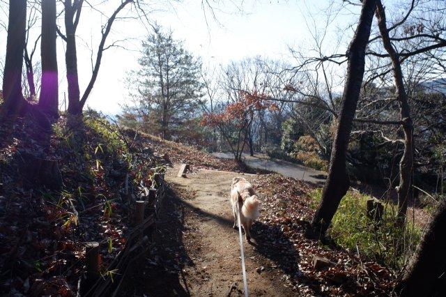 三ッ石森林公園 2020.2.2 116