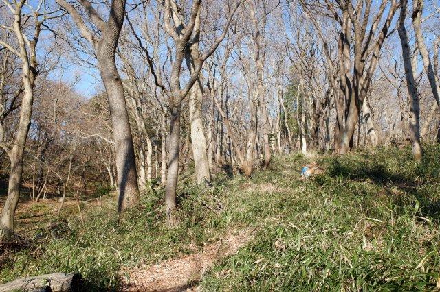 三ツ石森林公園 2020.2.6 008