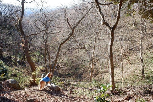 三ツ石森林公園 2020.2.6 012