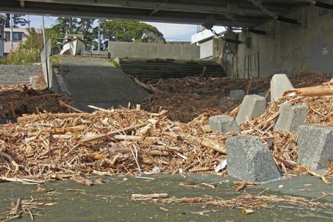 台風で打ち上げられた木