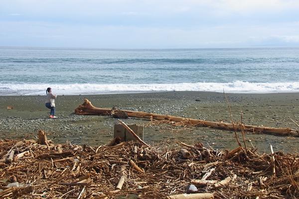 台風で御幸の浜海岸に打ち上げられた大木
