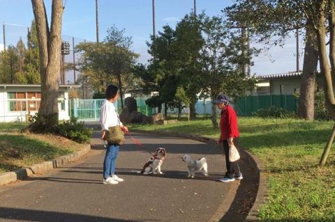 秦野カルチャーパークで挨拶を交わす二匹の犬