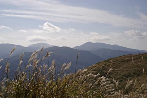 大野山山頂付近の風になびくススキ