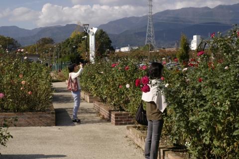 秦野カルチャーパークで秋バラを撮る人々