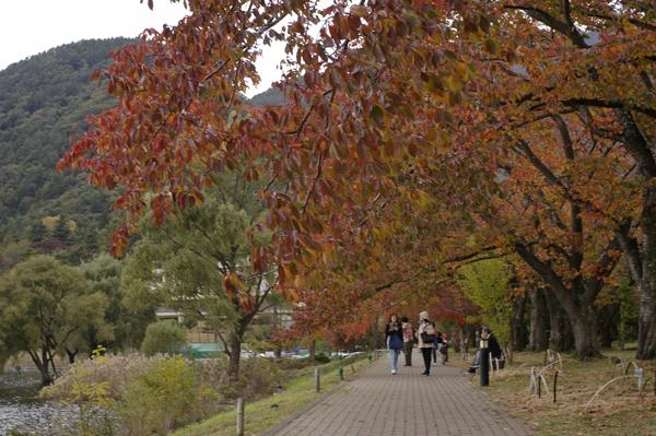 河口湖畔散策路の紅葉