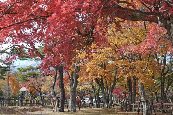 山中湖畔の紅葉