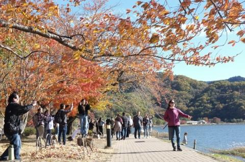 河口湖畔の紅葉