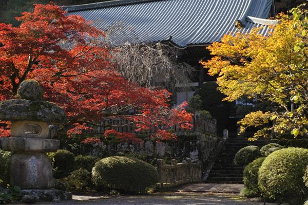 大雄山最乗寺の綺麗な紅葉