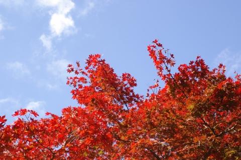 青空を背景にした紅葉