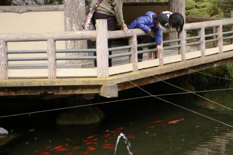 大雄山最乗寺の池を覗き込む子供
