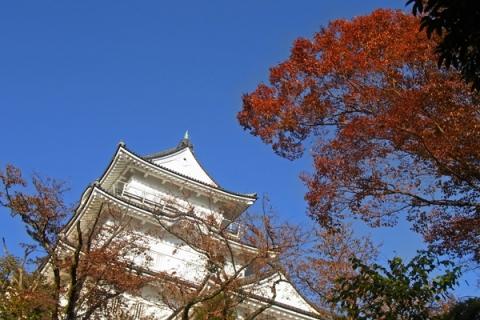 青空を背景にした紅葉と小田原城