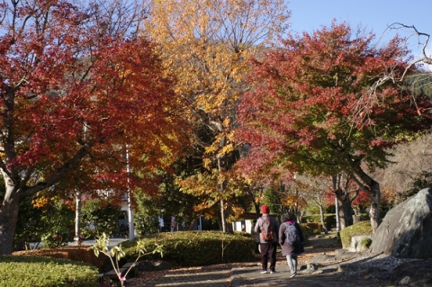 丹沢湖休憩所付近の紅葉