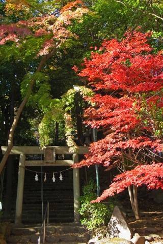 量覚院秋葉山神社の紅葉