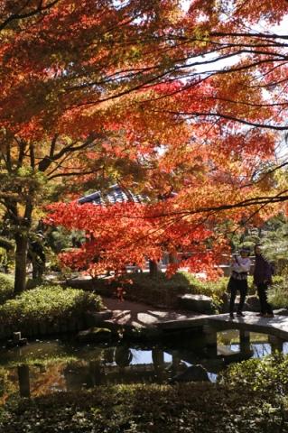 大磯城山公園不動池の紅葉
