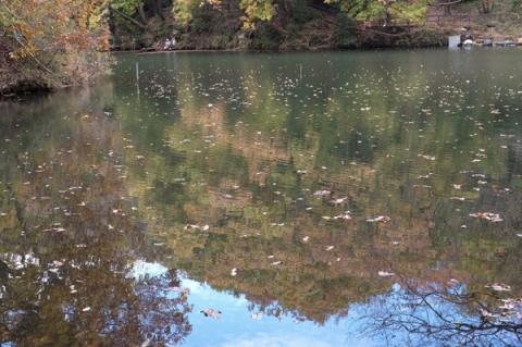 秦野震生湖の湖面に映る紅葉