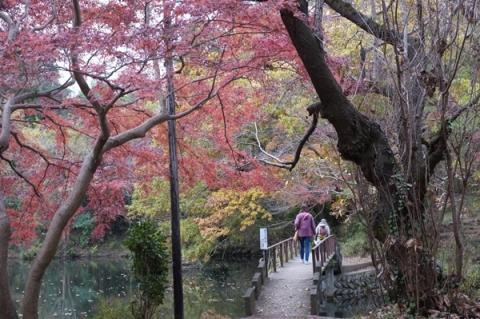 秦野震生湖の橋
